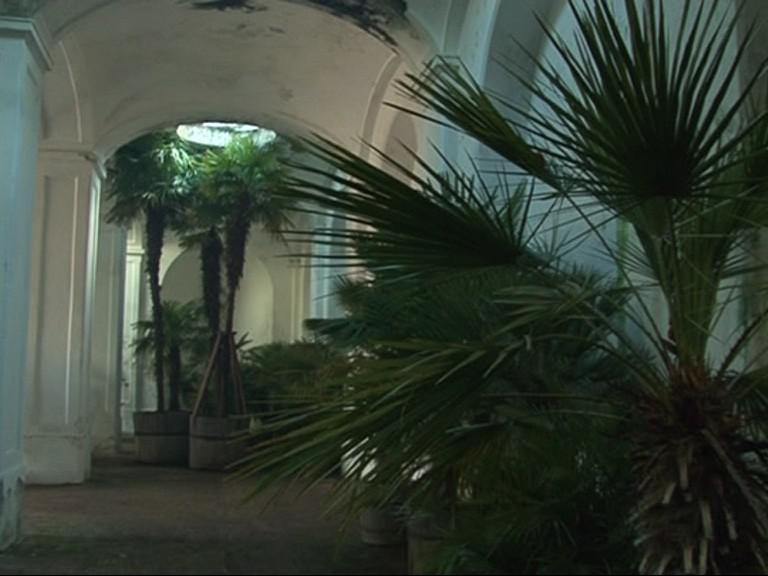 Zazimované palmy