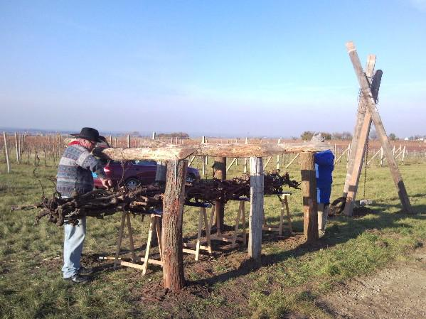 Instalace výstavy ve vinohradech