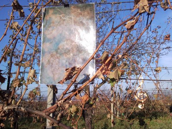 Výstava obrazů ve vinohradech