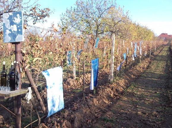 Výstava ve vinohradech