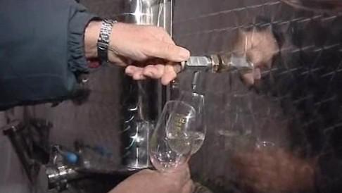 Ochutnávka Svatomartinského vína