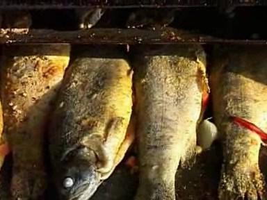 Výlov ryb v Jedovnicích