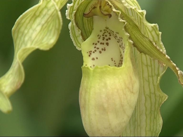 Tropická orchideje