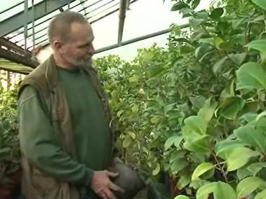 Zahradník Evžen Kopecký ve skleníku kamélií