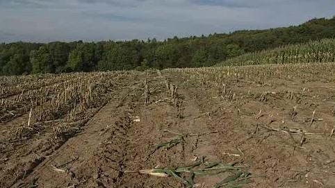 Divočáci na Zlínsku likvidují zemědělcům úrodu