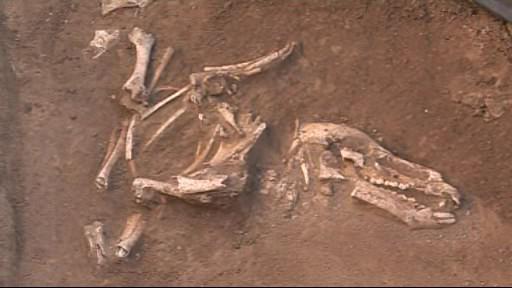 Kostra zvířete nalezená v hrobu válečníka
