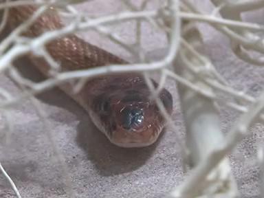 Exotický had na výstavě ve Vaňkovce