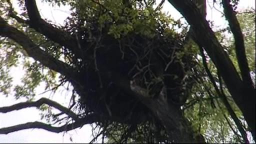 Orlí hnízdo