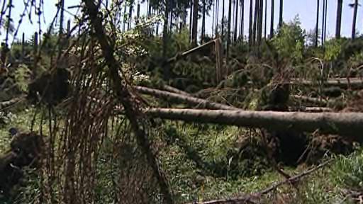 Masarykův les po kalamitě