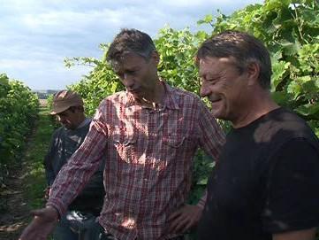 Vinař Radomil Baloun ukazuje škody napáchané špačky