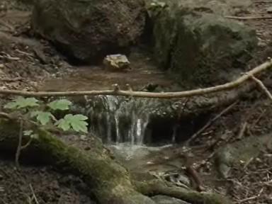 Voda ze studánky
