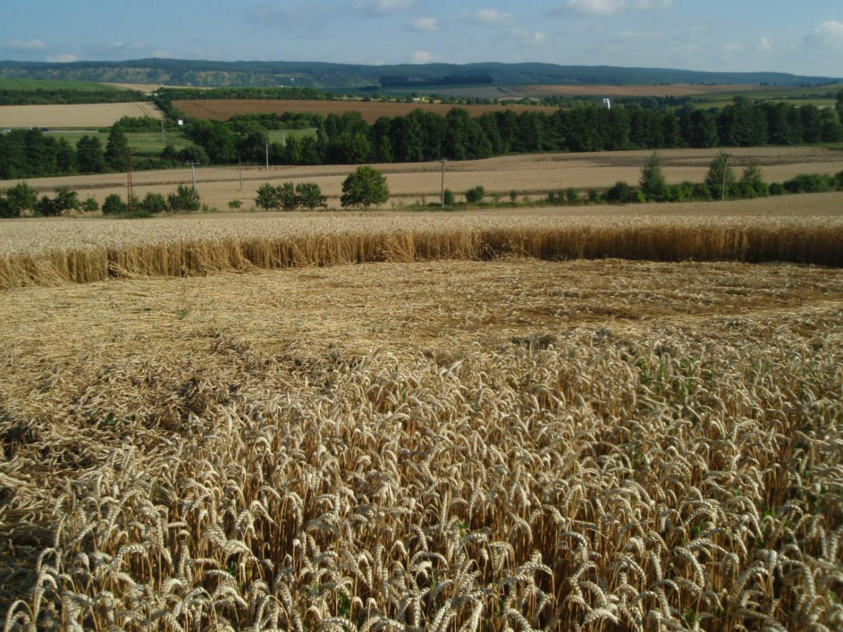 Kruhy v obilí nedaleko Velešovic