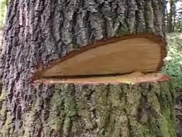 Zdevastovaný les u Nezdenic