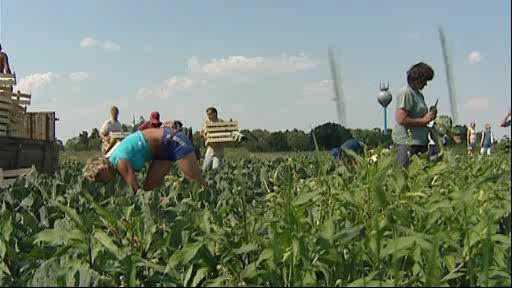 Zemědělci raději zaměstnají \