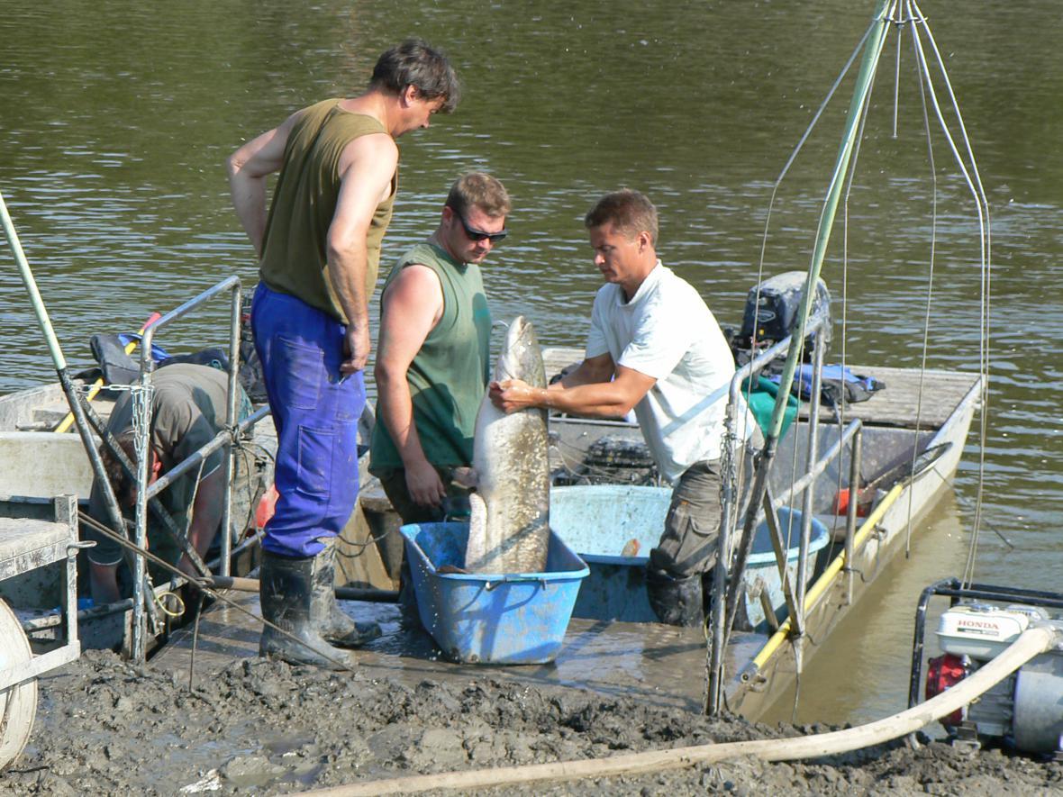 Rybáři vylovují Plumlovskou přehradu