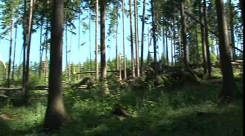 Lesy na Blanensku