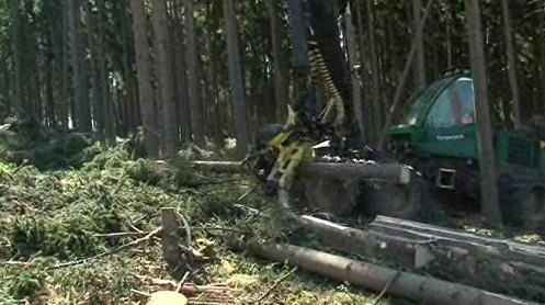 Úklid lesů na Blanensku