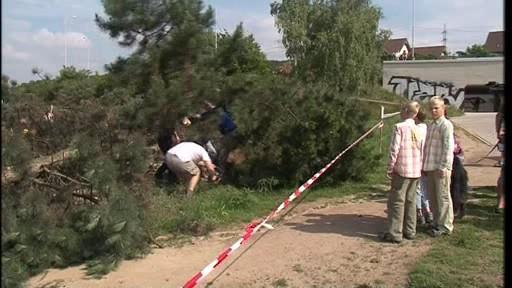 Lidé protestují proti kácení borovic v Brně-Líšni