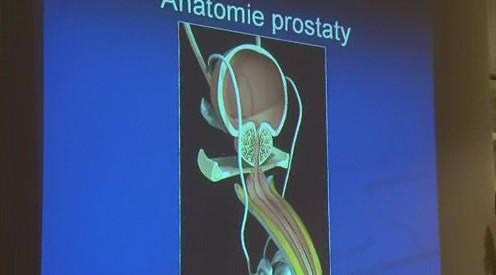 Anatomie prostaty