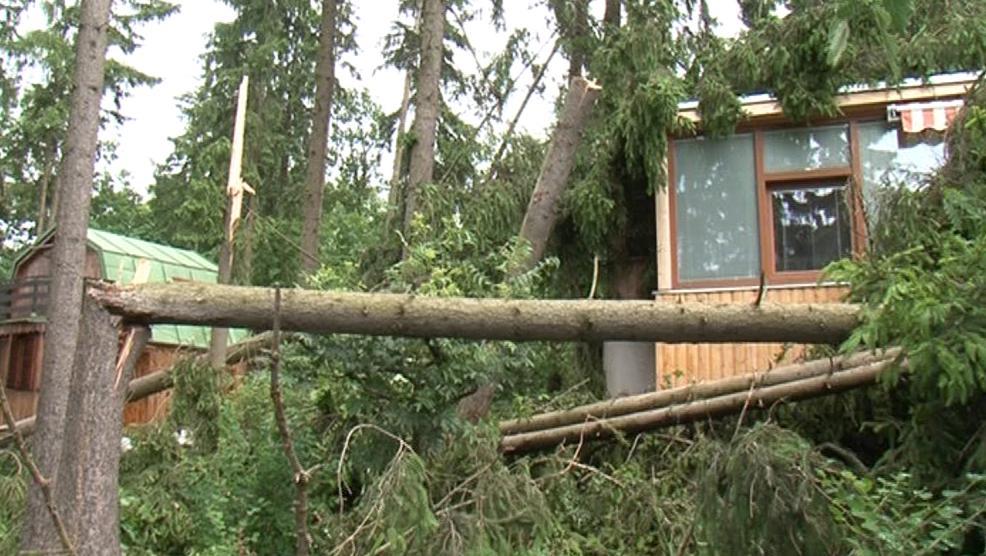 Bouřka vyvracela stromy