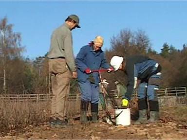 Výsadba jabloňového podnoží
