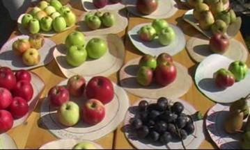 Jablečné slavnosti