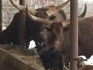 Vyškovský zoo park ukáže, jak žili lidé na venkově