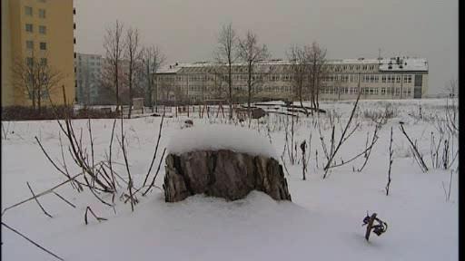 Po vykáceném borovém hájku v Brně-Líšni zůstala planina