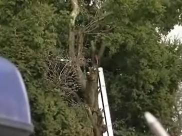 Důchodce ze Zlína se zabil při řezání stromu
