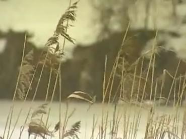 Ministerstvo životního prostředí chce zřídit v oblasti soutoku řek Moravy a Dyje CHKO