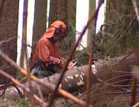 Lesní dělník při práci