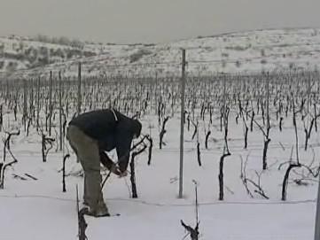 Kontrola vinohradu