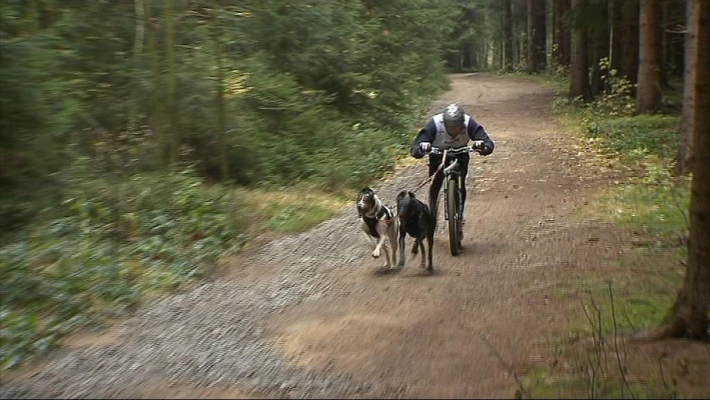 Kategorie koloběžka se dvěma psy