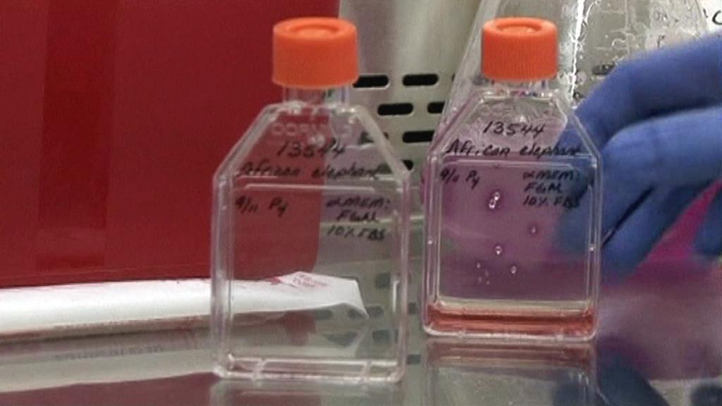 Výzkum kmenových buněk
