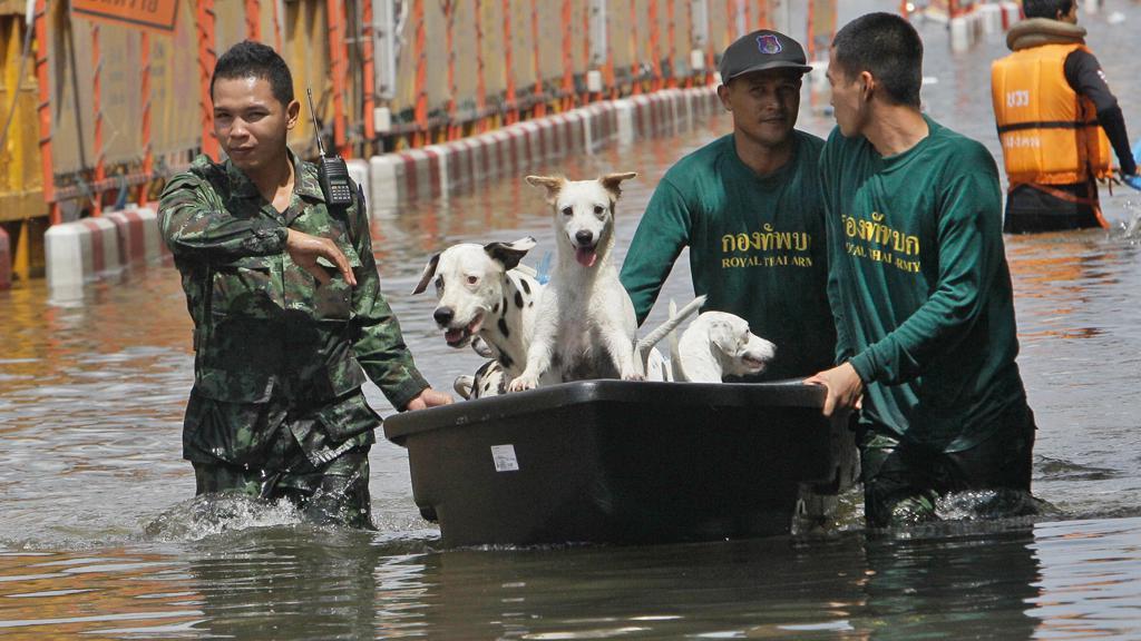 Záplavy v Thajsku