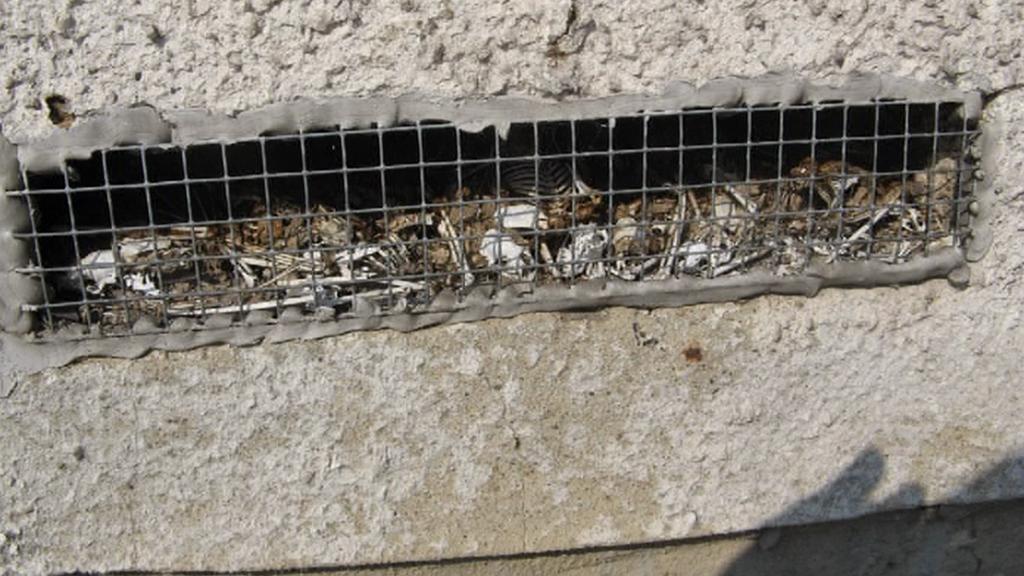 Kolonie uhynulých netopýrů