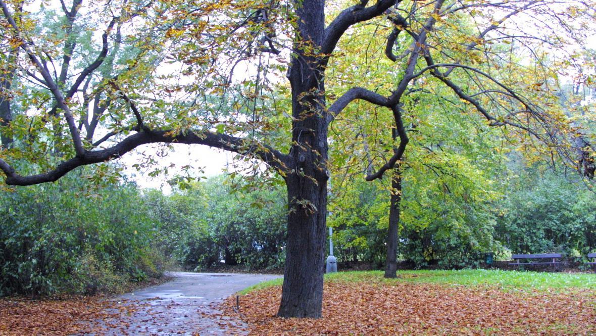 Padající listí