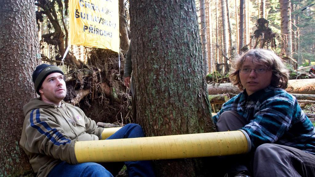 Aktivisté brání stromy na Šumavě