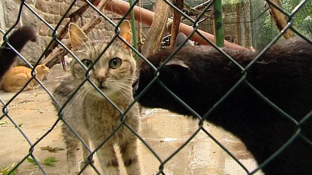 Útulek pro opuštěná a týraná zvířata