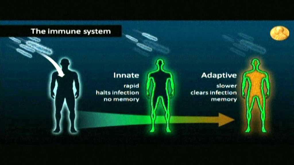Imunitní systém