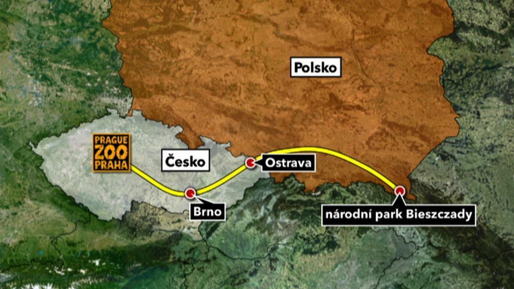 Cesta pražských zubrů do Polska