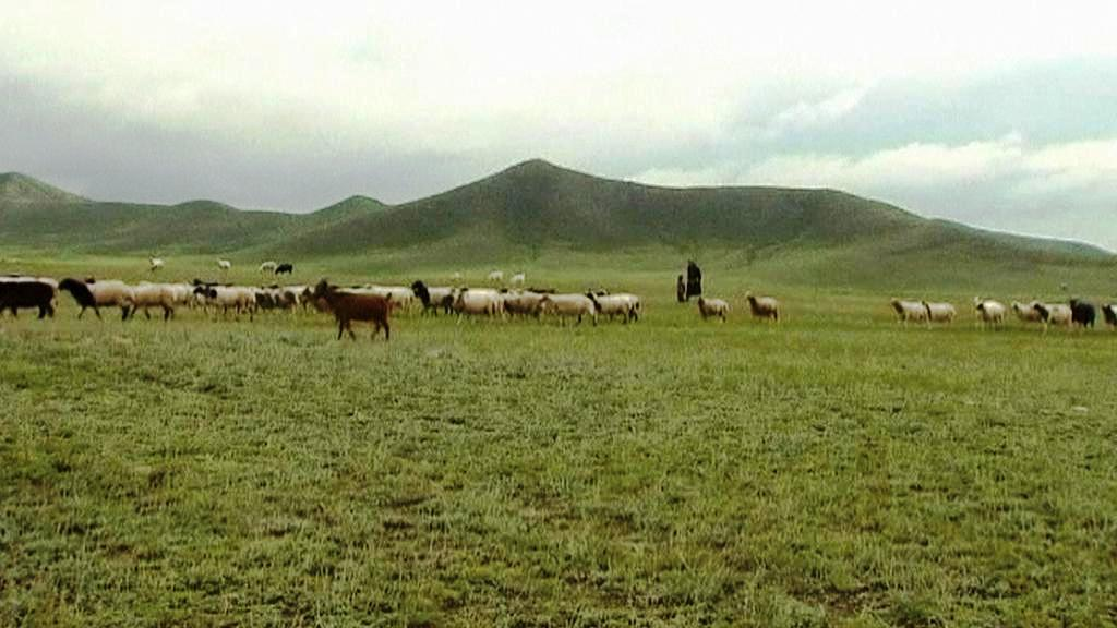 Mongolské pastviny