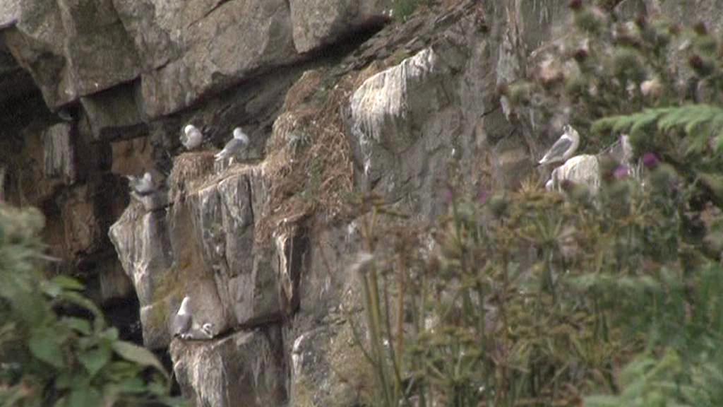 Hnízdiště papuchalků