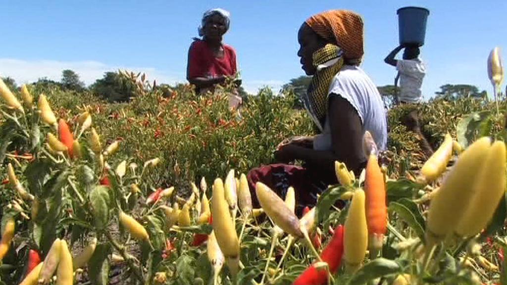 Africké zemědělství