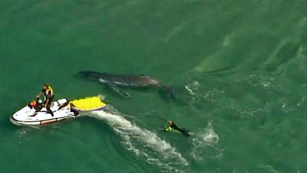 Australští záchranáři osvobodili uvízlé velrybí mládě