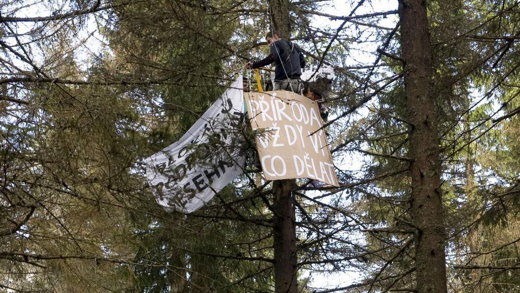 Aktivisté v korunách stromů