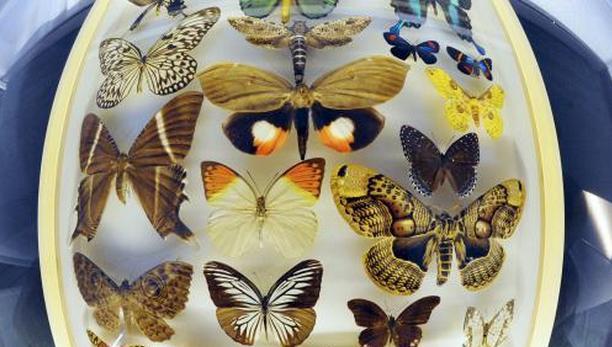 Krása motýlích křídel