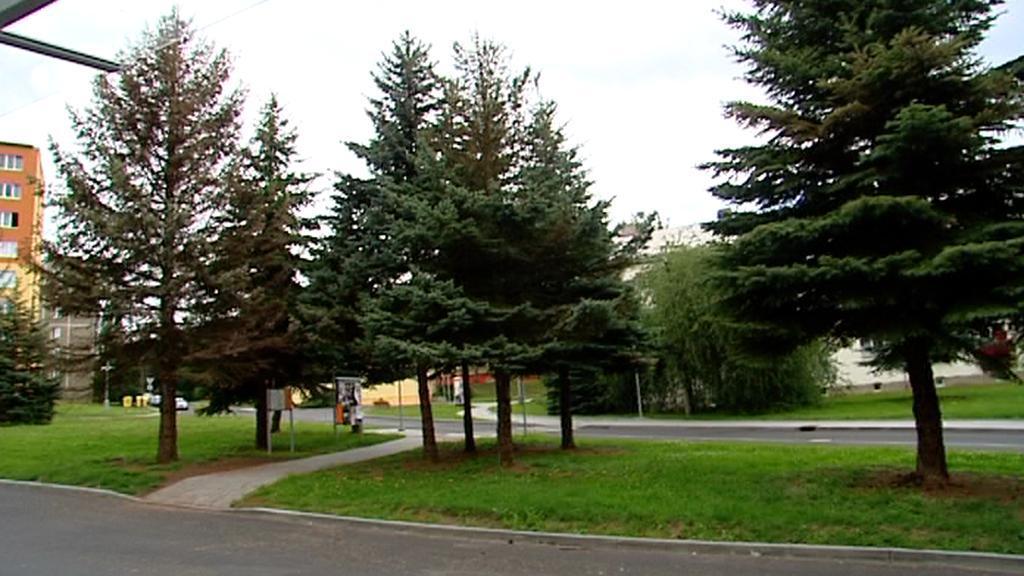 Napadené stromy