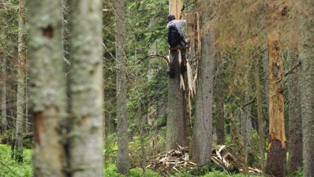 Lezec odkorňuje strom