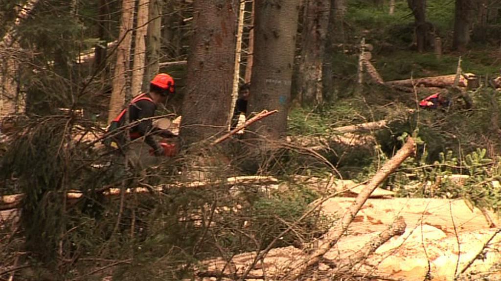 Dřevorubci v lese